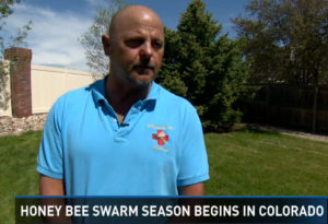 Honey bee season begins in Colorado