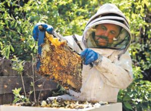 Busy bees: More Coloradans tending backyard hives